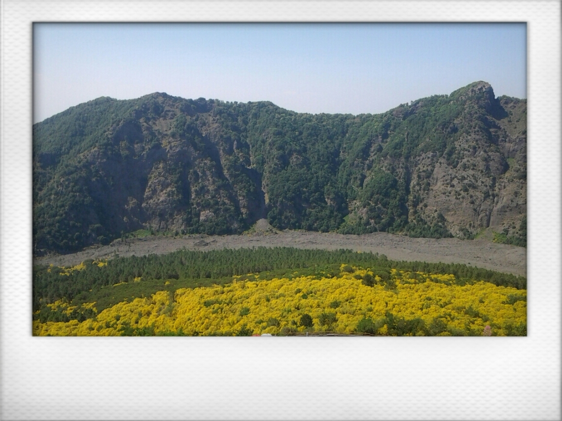 Flowers on Vesuvius1